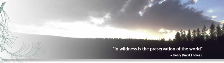 In Wildness is the Preservation of the World. - Henry David Thoreau